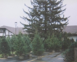 Christmas Trees Now at Zigfield Troy Golf